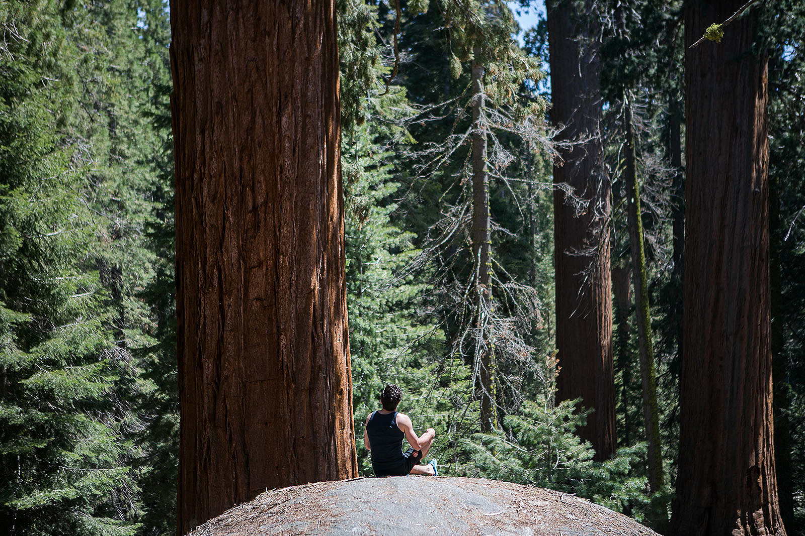 One Day in Kings Canyon and Sequoia National Parks: Where to Go & What to See