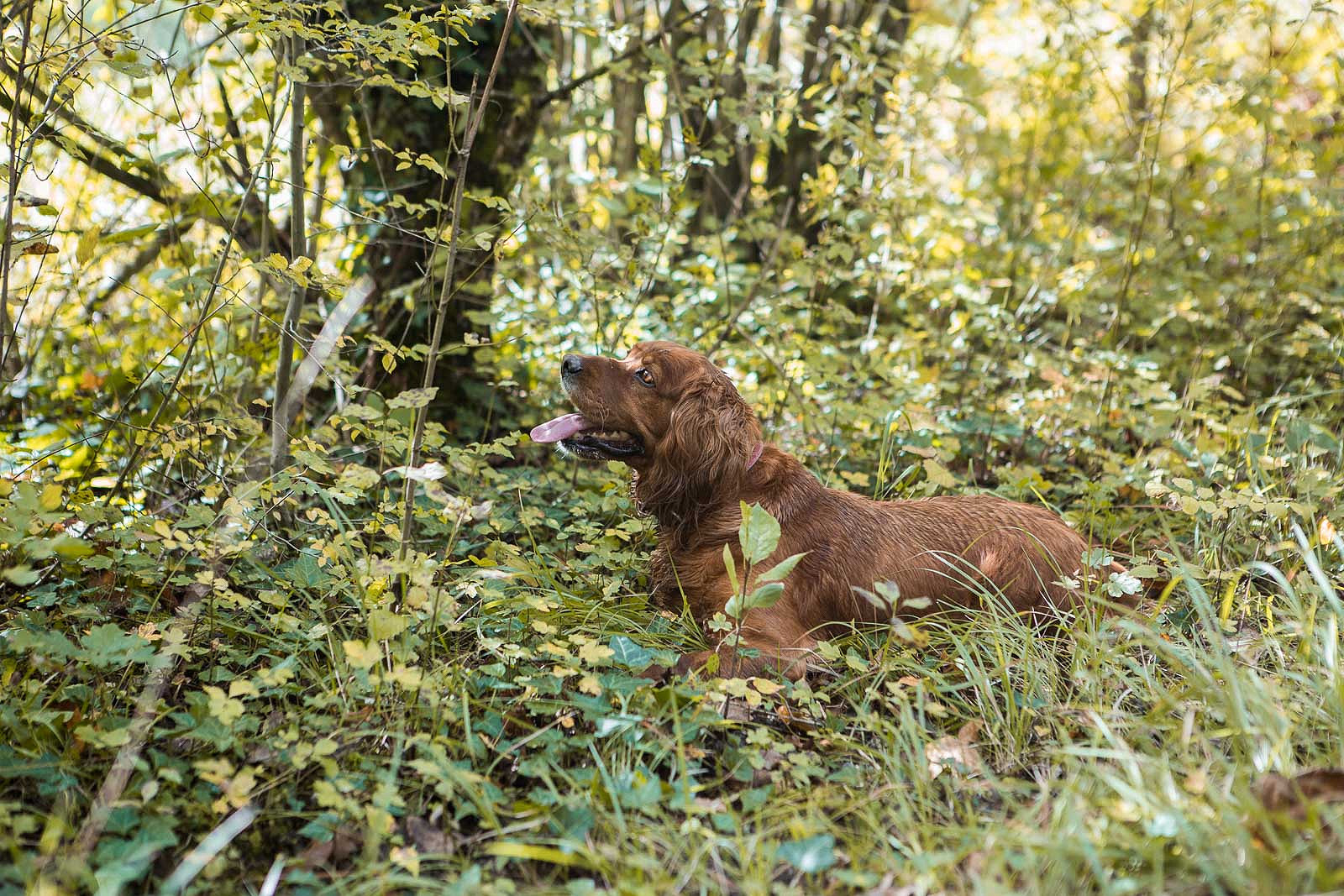 The Truffle Experience: Where to Go Truffle Hunting and Taste Truffles in Istria