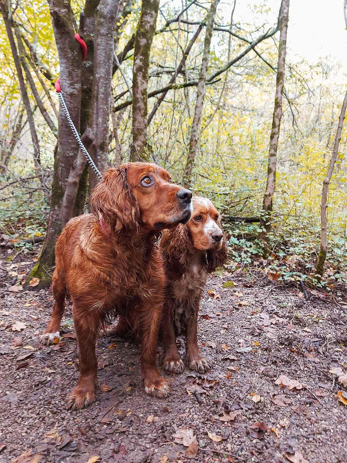 truffle_hunting_blog_44