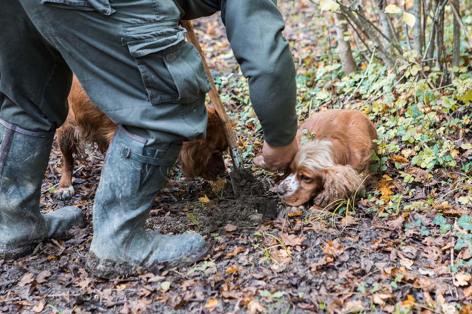 truffle_hunting_blog_34
